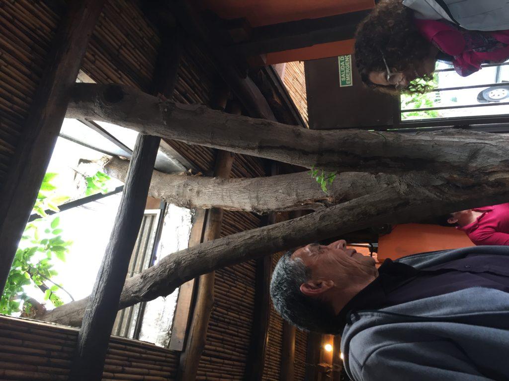 Árbol en Casa de campo